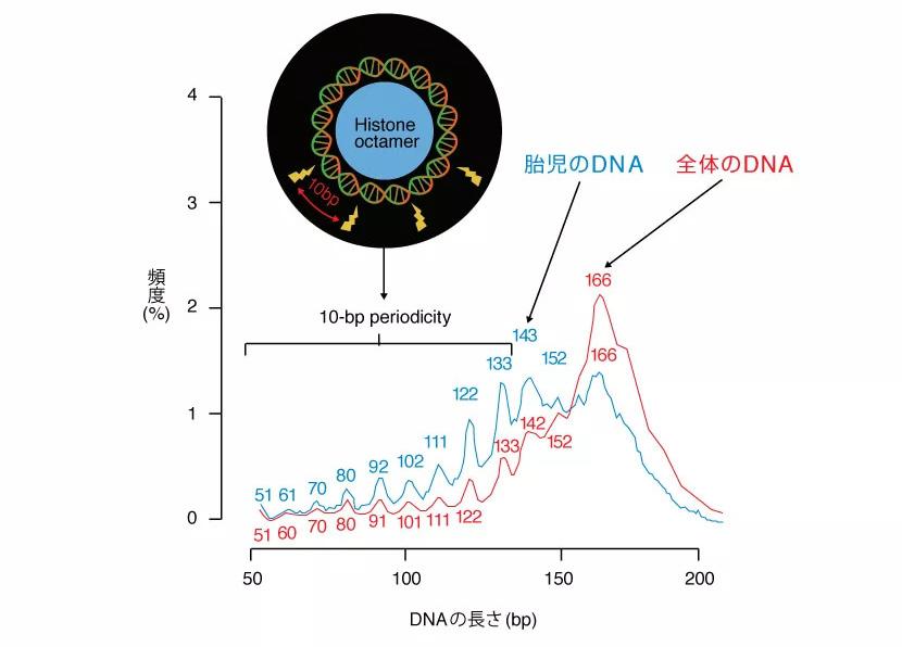 血漿中のcfDNAの長さの分布